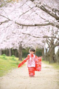七五三・ロケーション・桜・写真