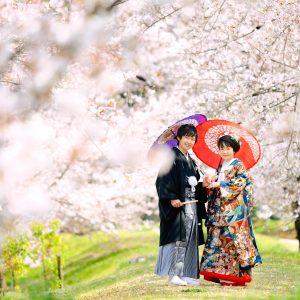 愛媛,松山,結婚,前撮り,フォト婚,チャペル,桜,写真,ロケーション,衣裳,和装,指輪,ウェディング